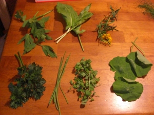 Clockwise from top left: lovage, sorrel, Mexican tarragon, Nasturtium leaves, salad burnet, chives, and parcel