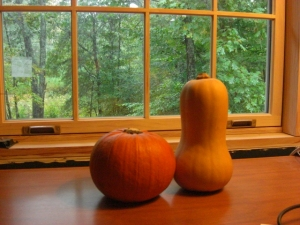 Squash and Pumpkin stare out the window.