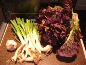 garlic, green onions, hydroponic lettuce